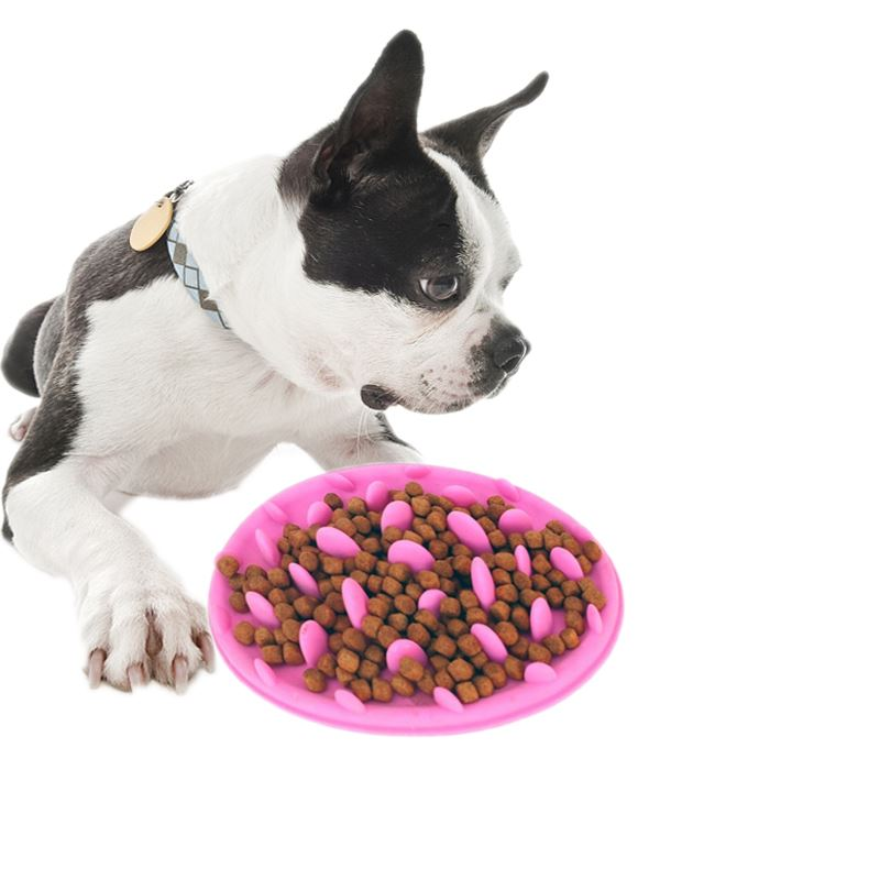 What Do You Need To Prepare If You Have A Pet Dog ?